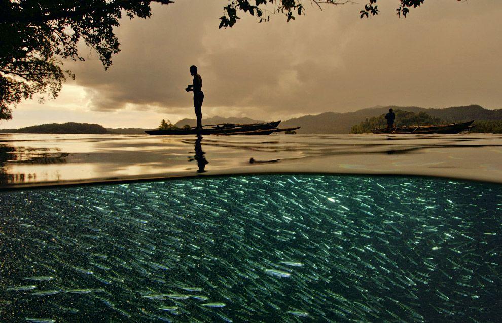 10. Тысячи маленьких рыбок. Индонезия