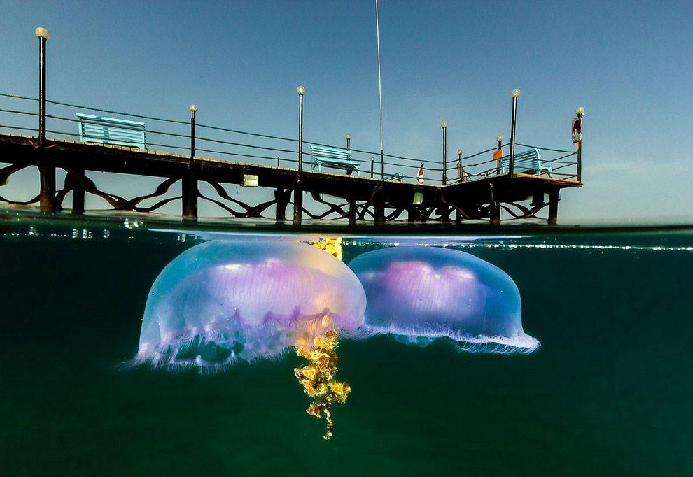 7. Медузы.