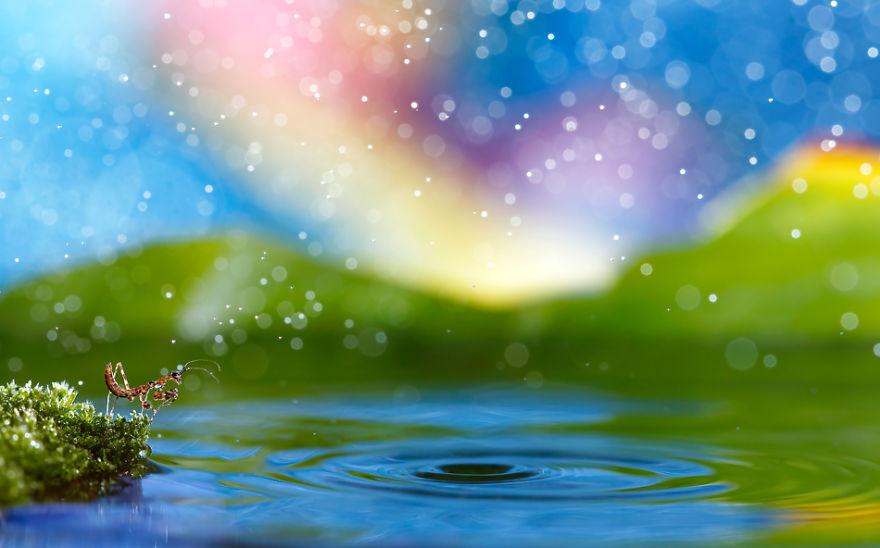 богомол и вода