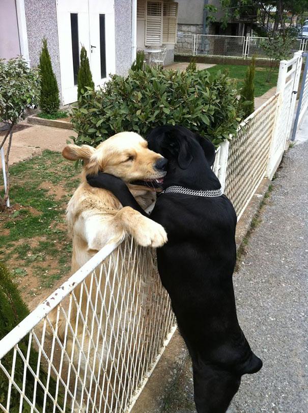 лучший друг