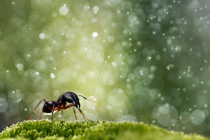муравей и снег