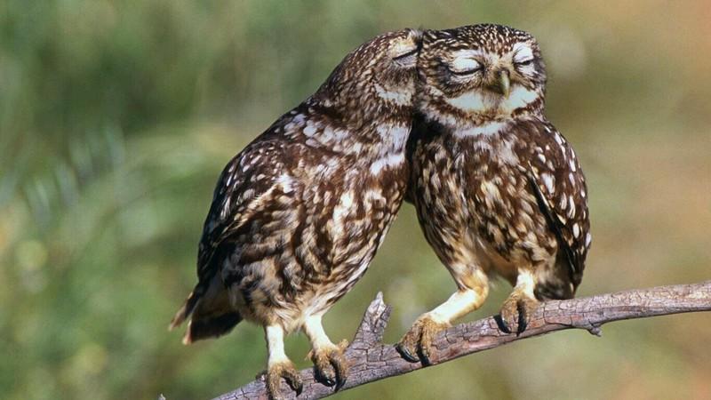 owls100