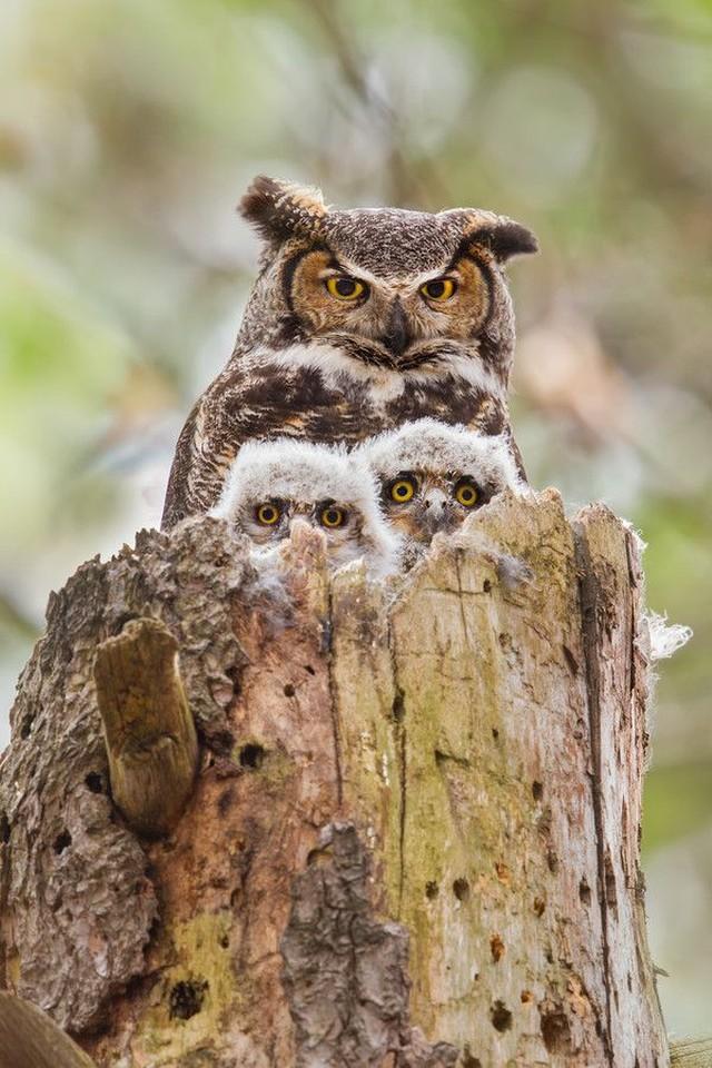 owls89