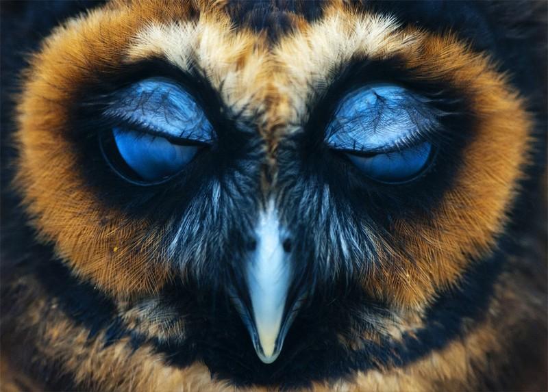 owls90