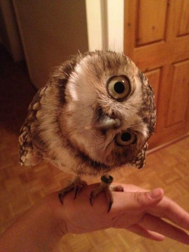 owls91