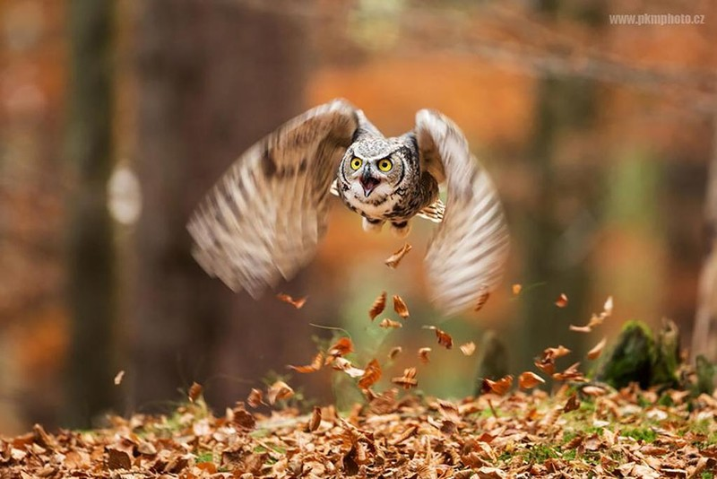 owls94