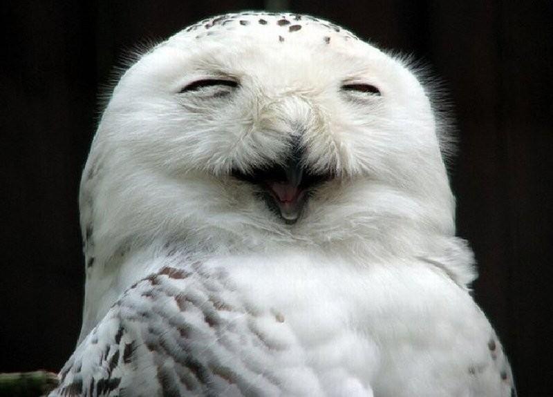 owls96