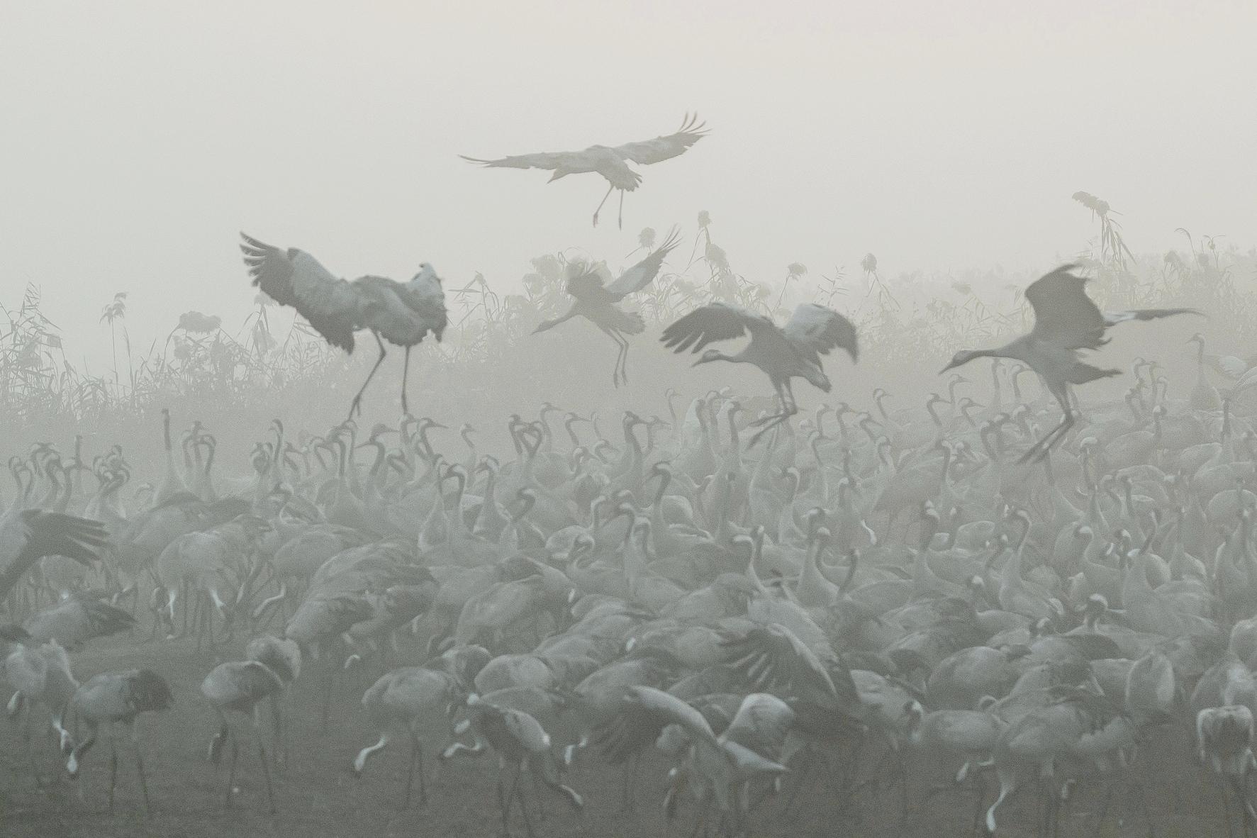 Журавушки в густом тумане...