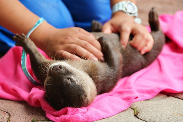 belly-rub-animals-43__605