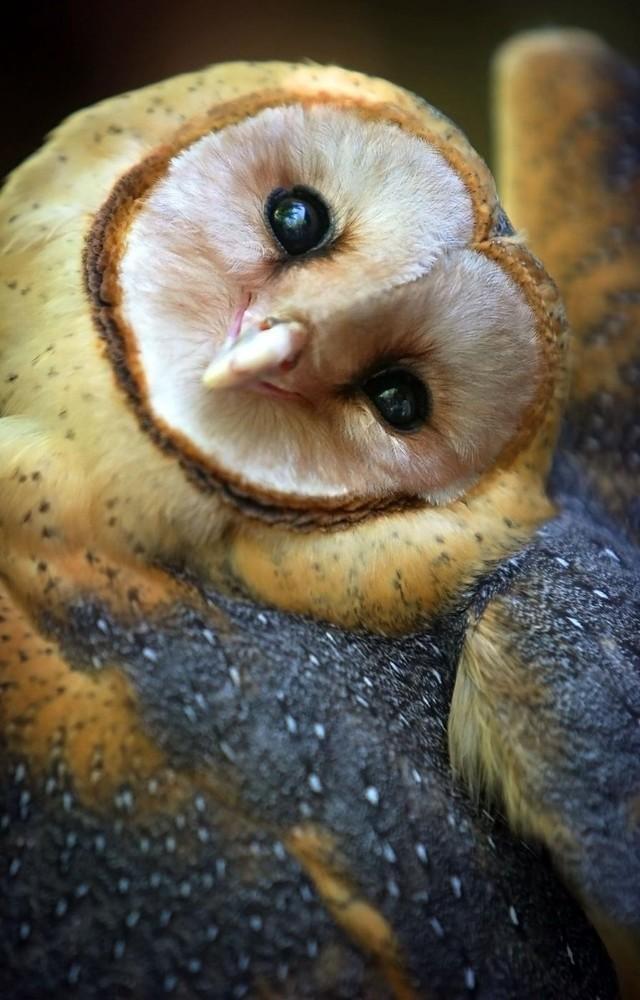 owls03