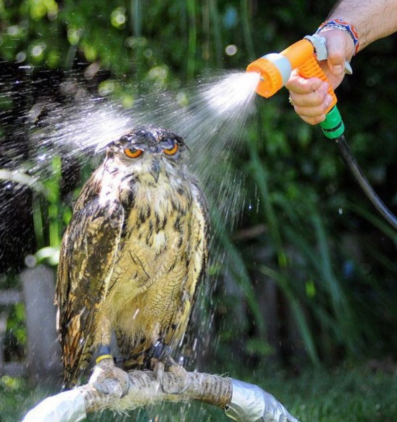 owls05