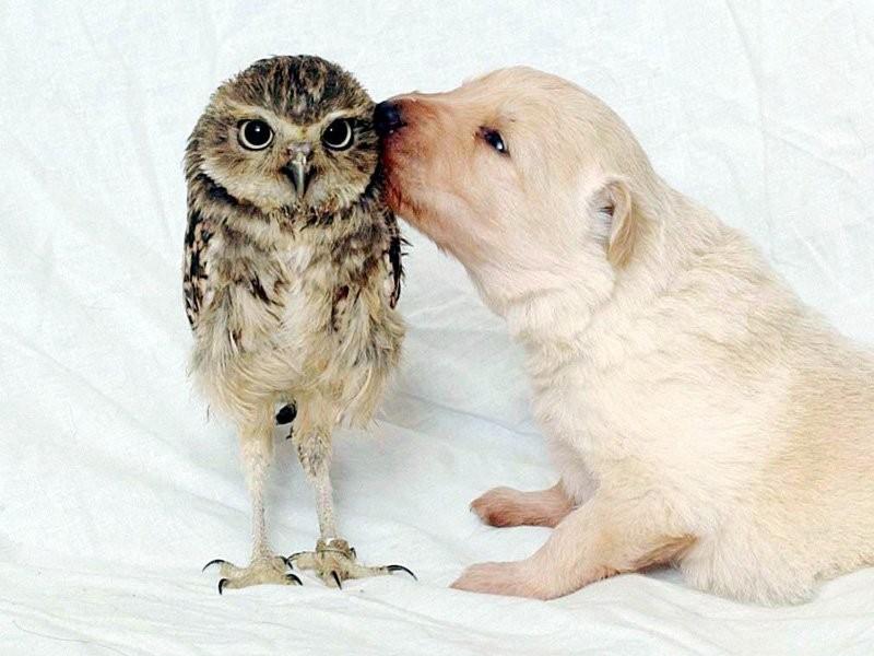 owls13