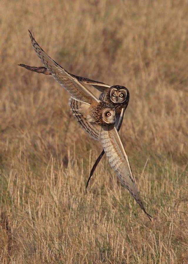 owls14