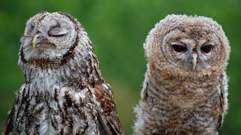 owls42