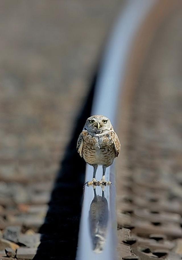 owls45