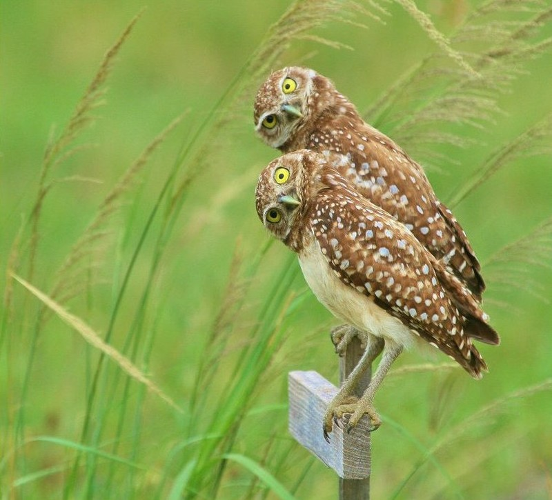 owls54