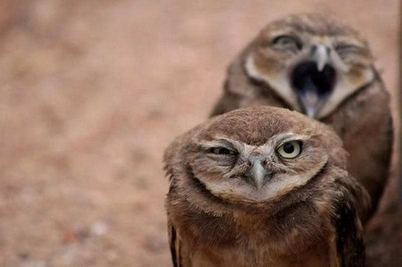 owls58