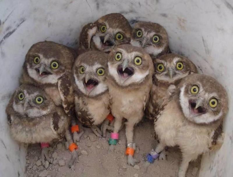 owls67