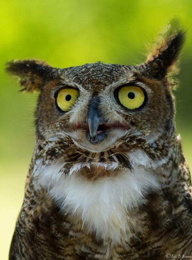 owls69