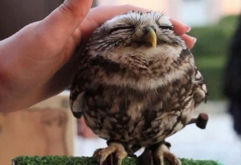 owls70