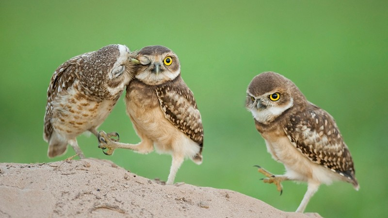 owls72