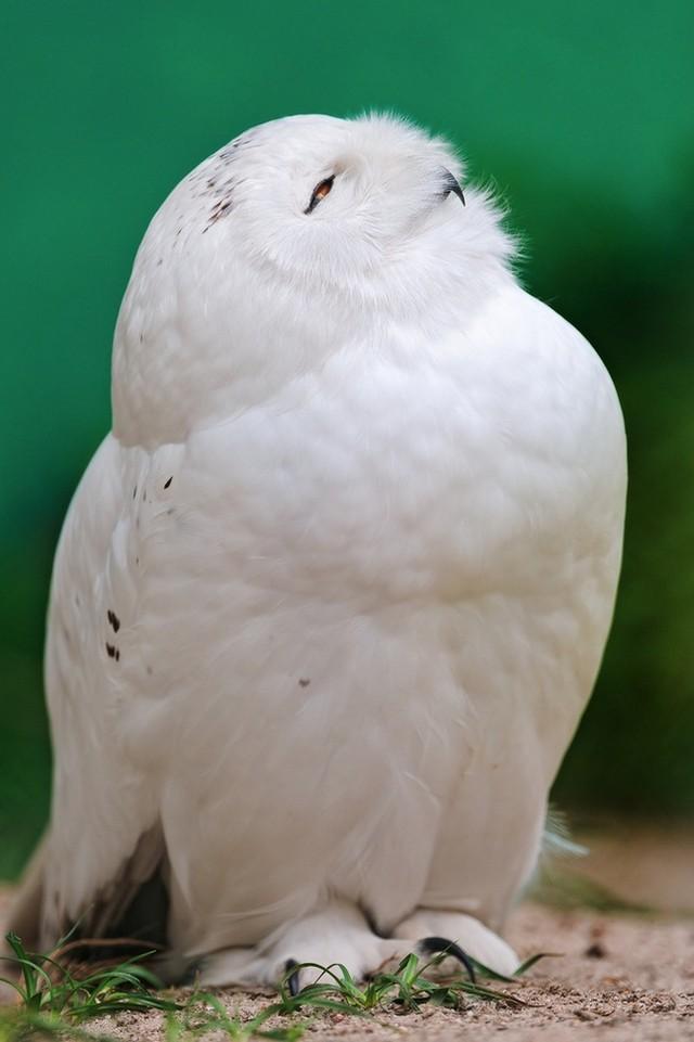 owls76