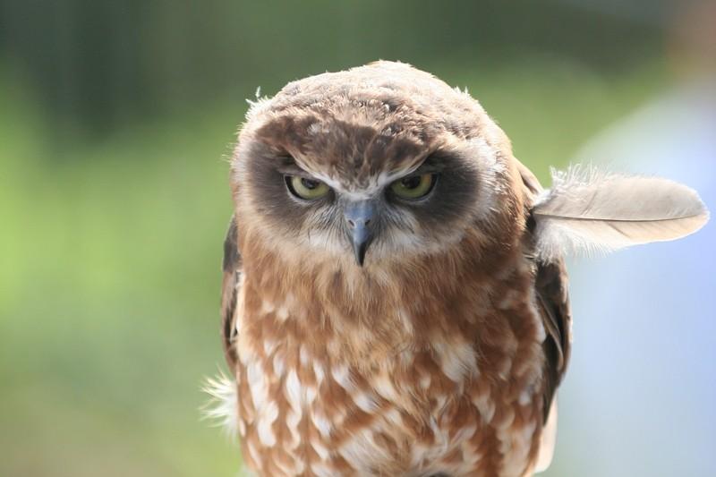 owls77