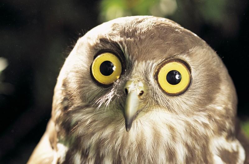 owls82