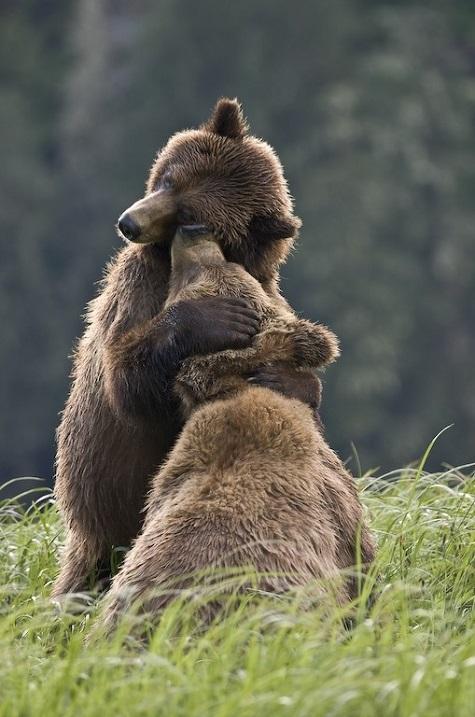 10-Медведи обожают обнимашки