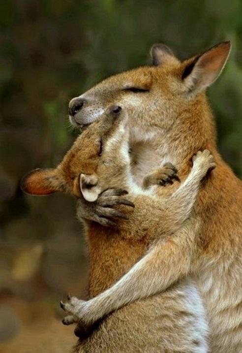16-Кенгуру любят обнимашки