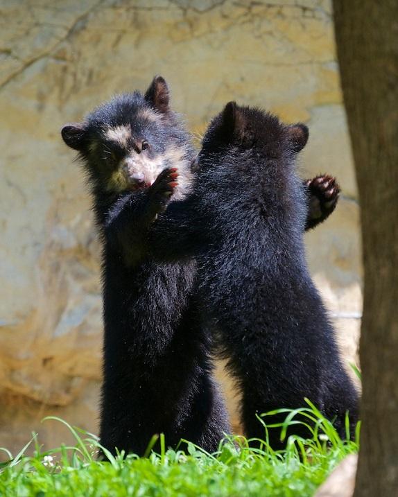 21-Медвежата, которые обожают обнимашки