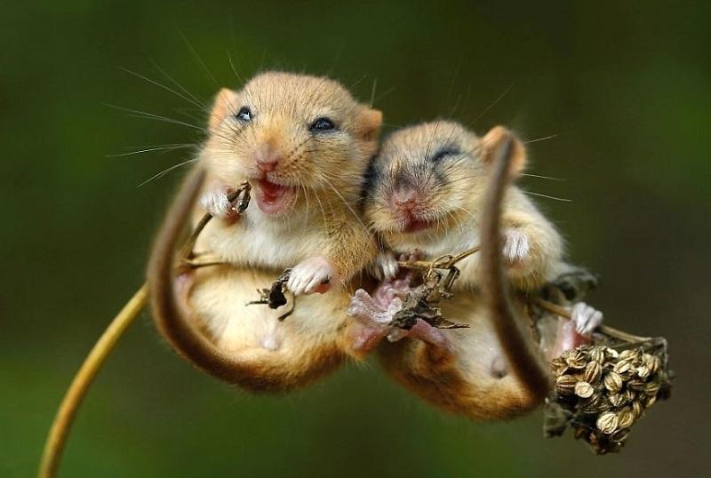 25-Мышки-обнимашки