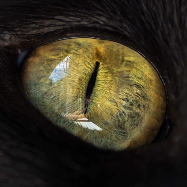 Cat-Eyes6__605