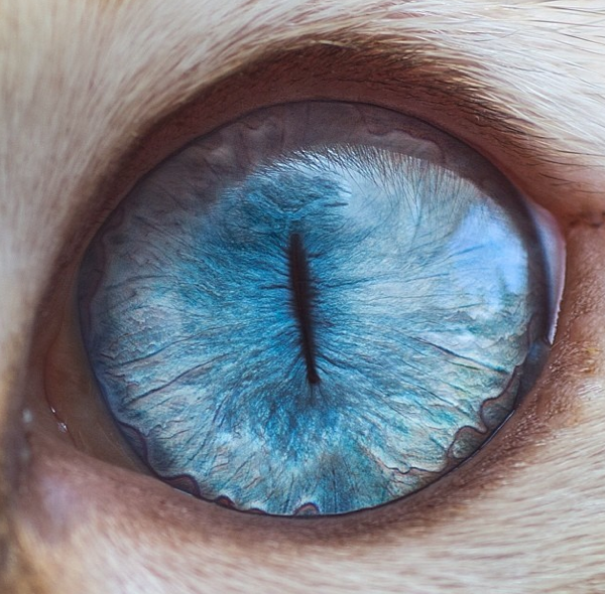 Cat-Eyes7__605