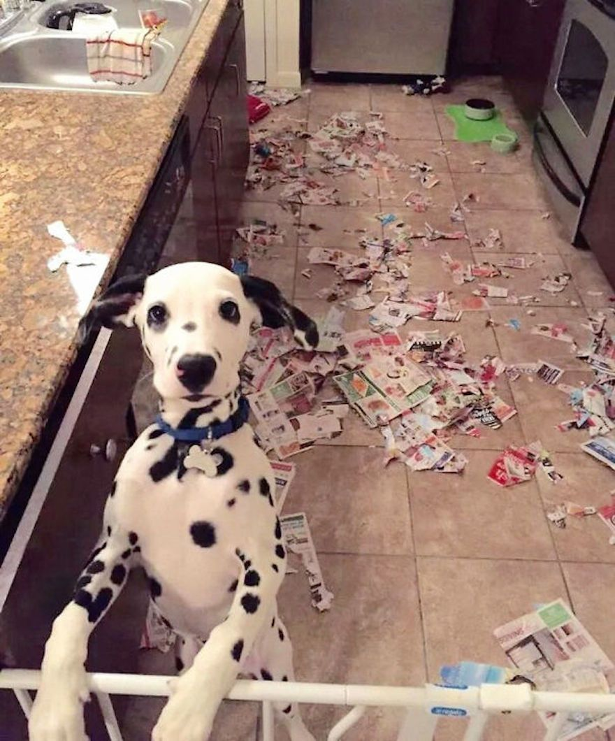 Dogs-Can-Be-Jerks-Too-1__605
