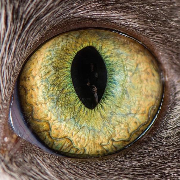 imogens-eye__605
