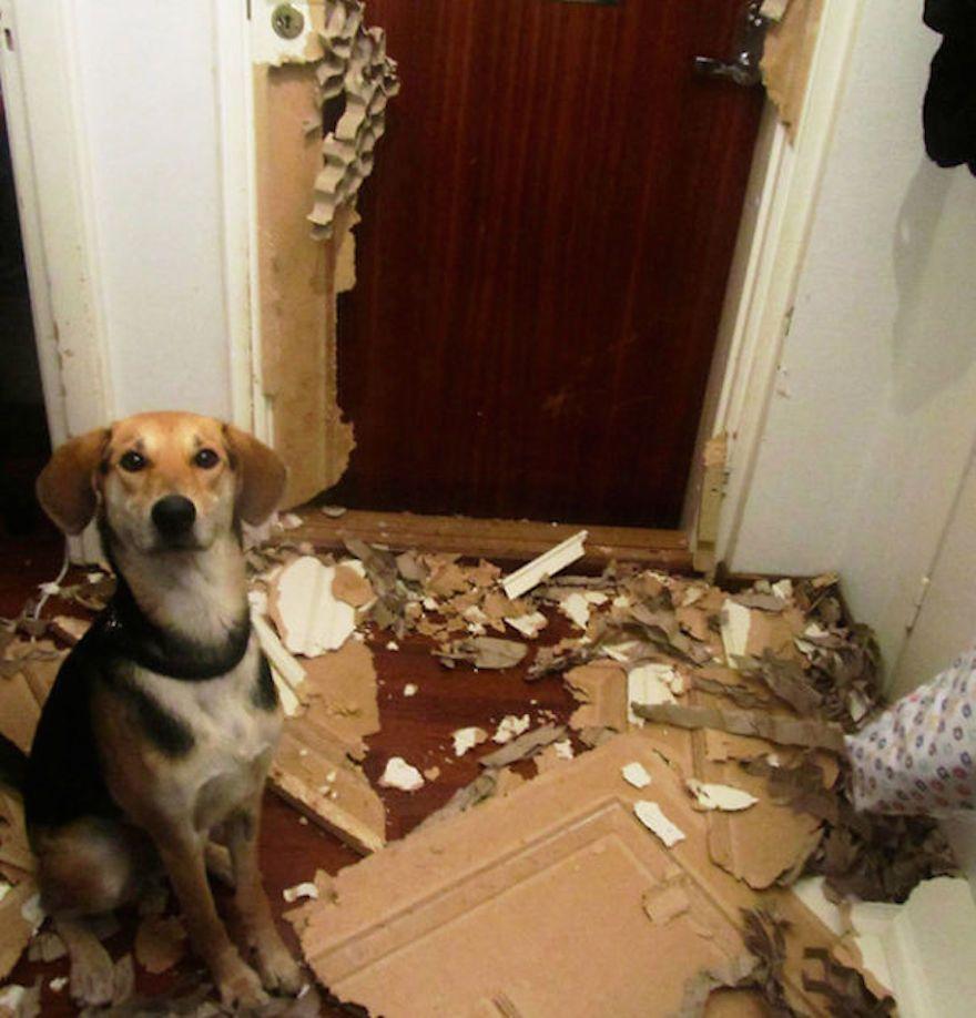 naughty-dog-4__605