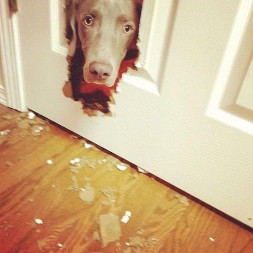 naughty-dog-brokes-the-door__605