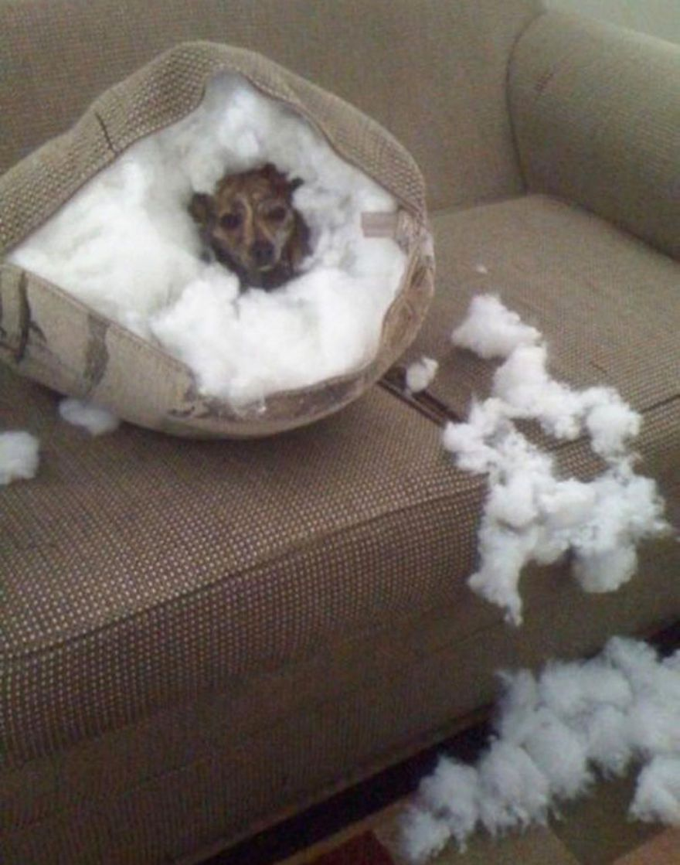 naughty-dog-pillow__605