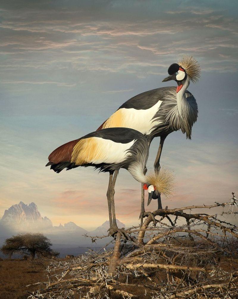 Featheredmodels-1