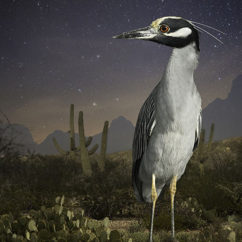 Featheredmodels-10