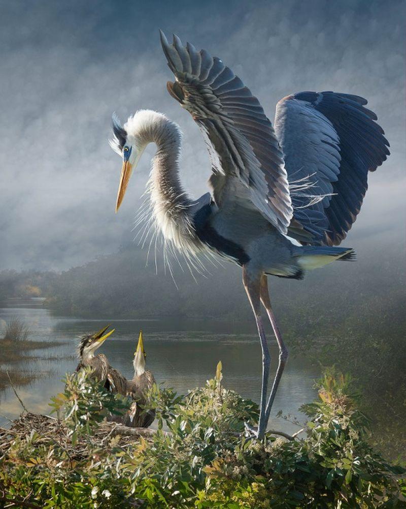 Featheredmodels-5