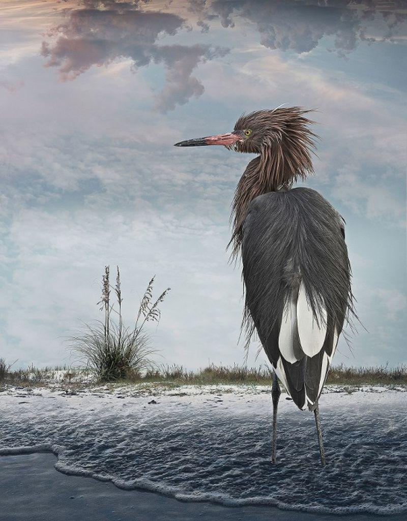 Featheredmodels-7