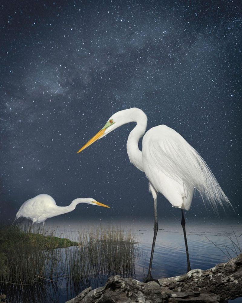 Featheredmodels-8