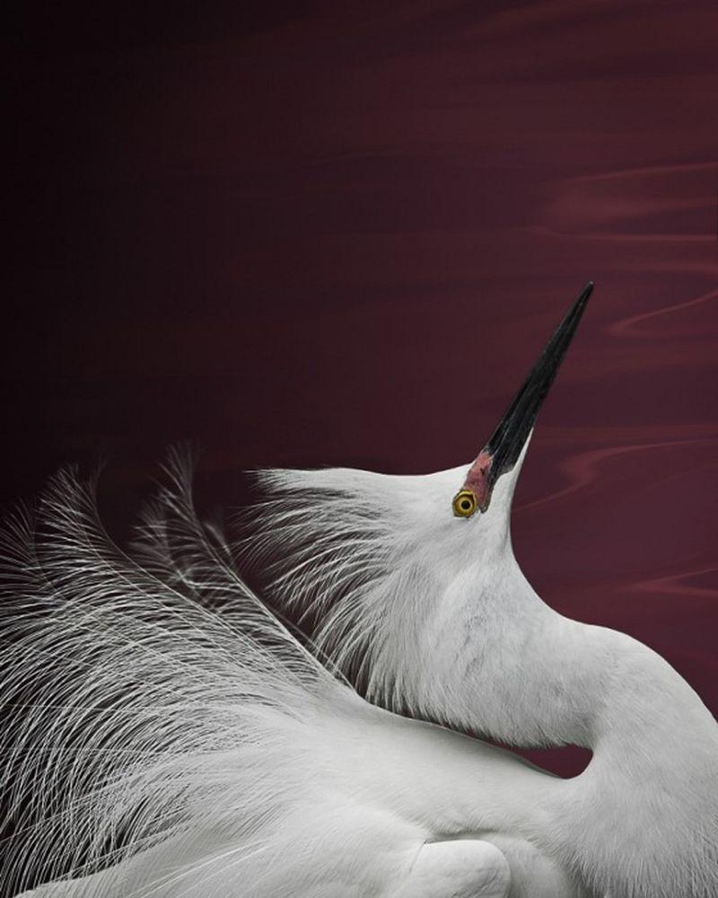 Featheredmodels-9