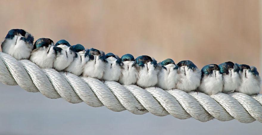 CuddlingBirds01