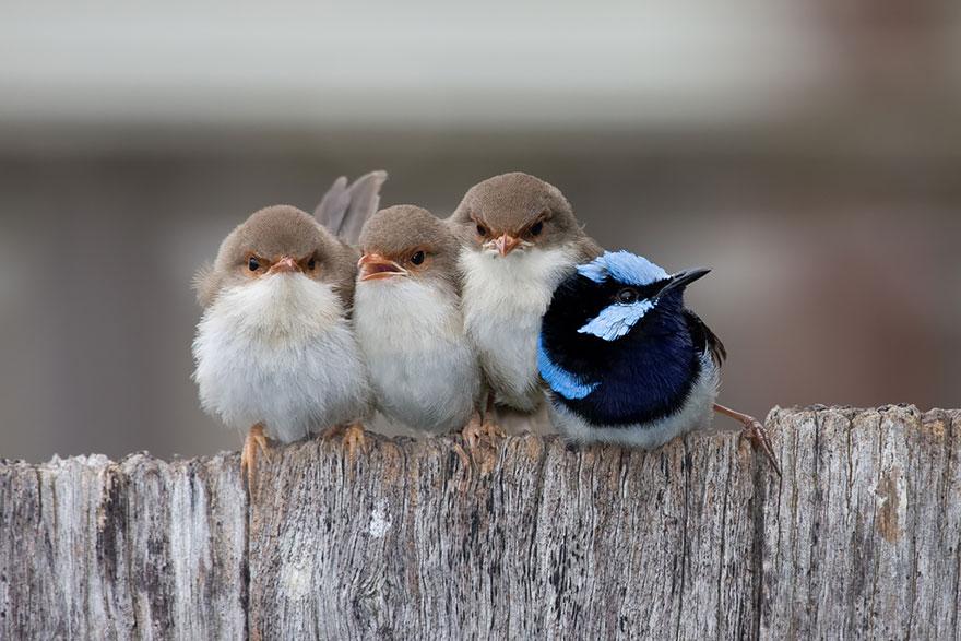 CuddlingBirds05