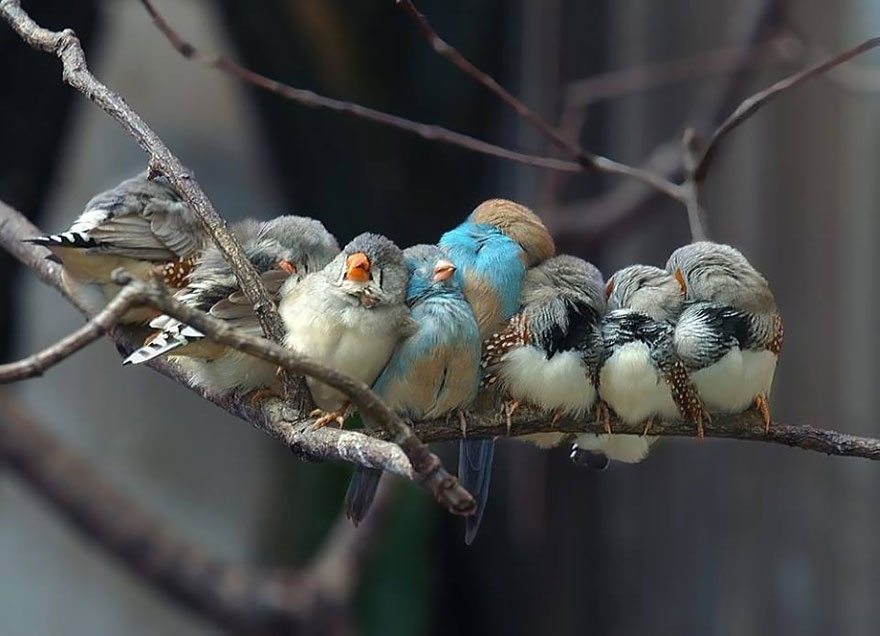 CuddlingBirds12