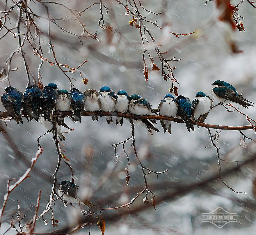 CuddlingBirds13