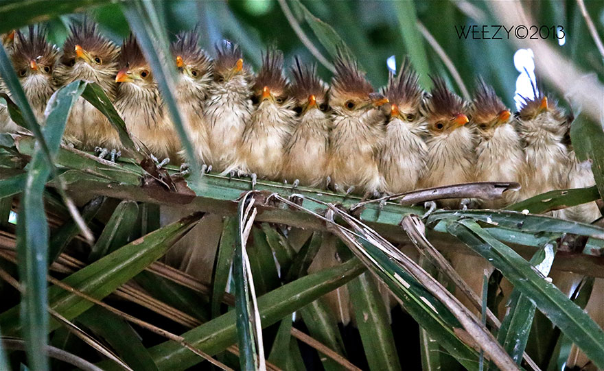CuddlingBirds15